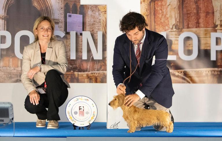 Expo Int. Bastia Umbra 2018