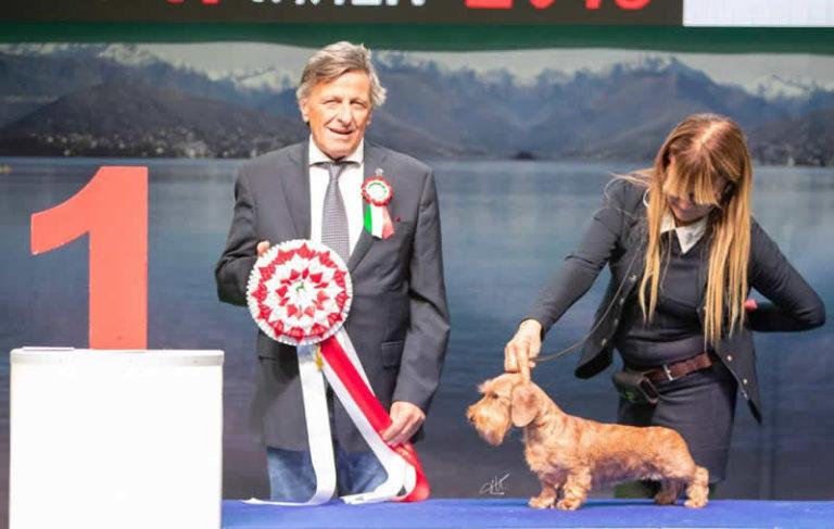 Insubria Winner 4.11.2018