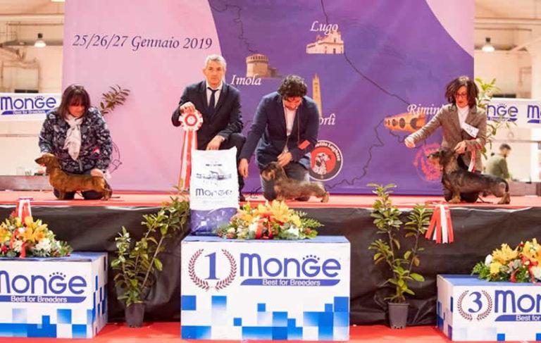 Expo Internazionale Cesena 2019