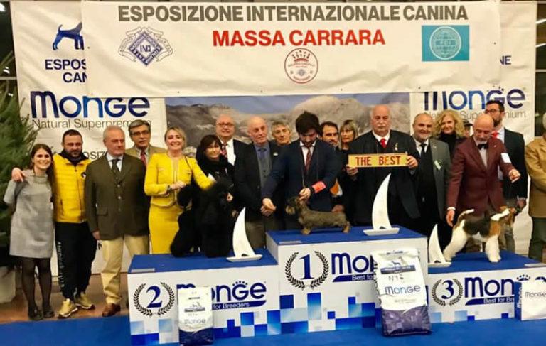 Expo Internazionale Massa Carrara 2019