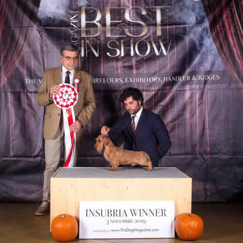Insubria Winner 2019